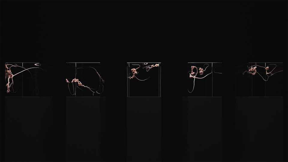 """OCETA"" Audio/CG Experiment and NFT by Korb and Echolab | STASH MAGAZINE"